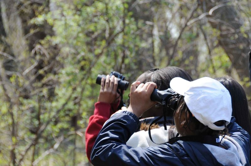 ecoturismo observacao aves