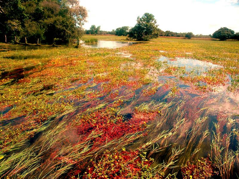 ecoturismo pantanal